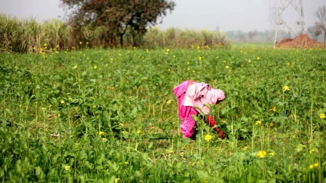 Village women working in the green field
