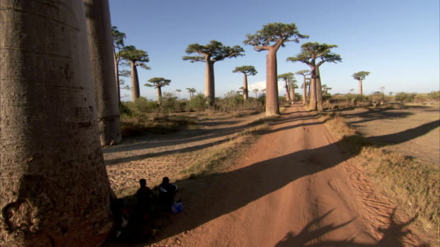 Villager rest in the shade of a baobab tree in Madagascar. Available in HD.