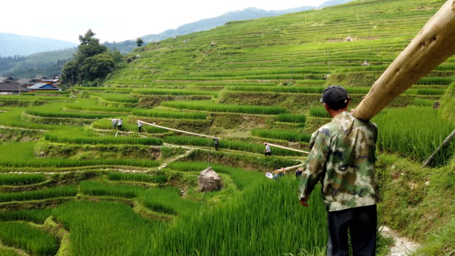 villagers carry wood in terraces,guizhou,china. - landscaped stock videos & royalty-free footage
