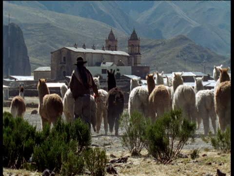 vídeos y material grabado en eventos de stock de villagers herd llamas and alpacas - peruano