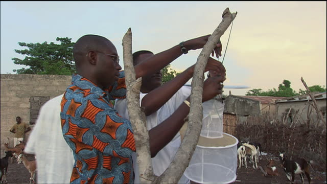 zi villagers setting up a mosquito light trap from a tree outside homes in a village / africa - netting stock videos and b-roll footage