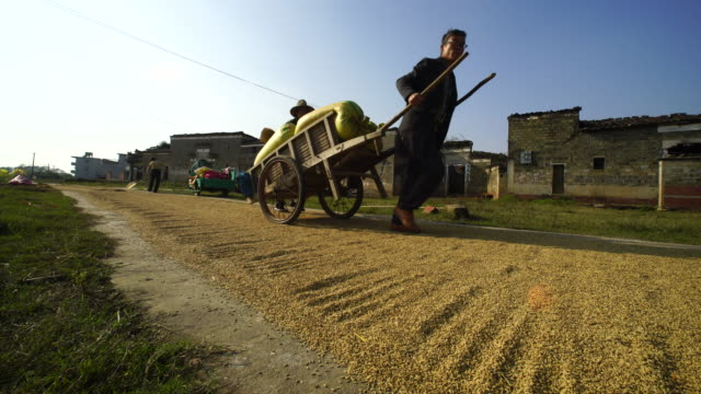 villagers sun dry their rice product in menlouli village - 茶色点の映像素材/bロール