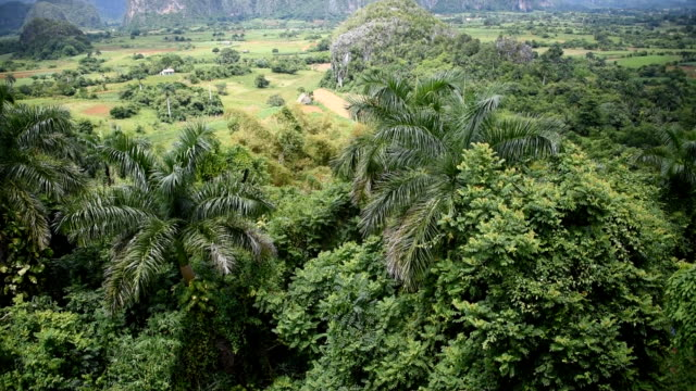 vinales valley: exhuberant vegetation and beautiful view of mountains - cuba stock videos and b-roll footage