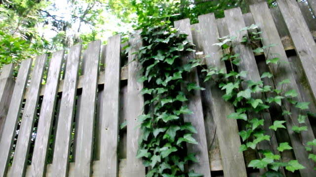 vine covered fence - interlocked stock videos & royalty-free footage