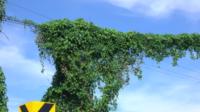 vine growth on power line - power line stock videos & royalty-free footage