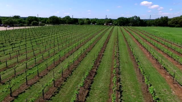 Vineyard Aerial Fly Over Rows of Wine growing