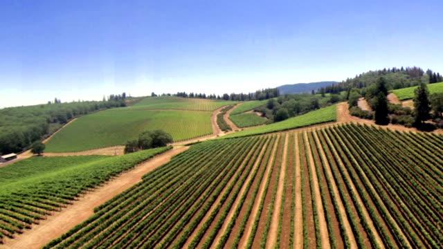 Vineyard Aerial