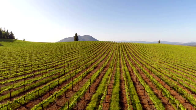 vineyard aerial - vine stock videos & royalty-free footage