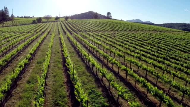 vineyard aerial - vineyard stock videos and b-roll footage