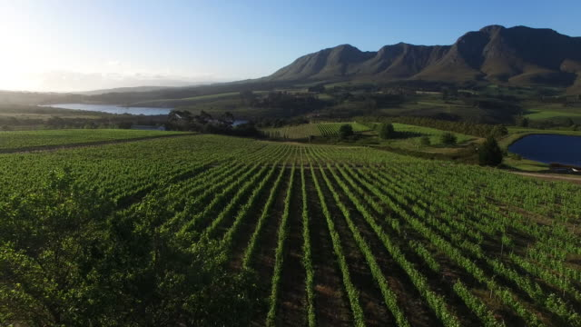 vineyard aerial view, south africa - vineyard stock videos & royalty-free footage