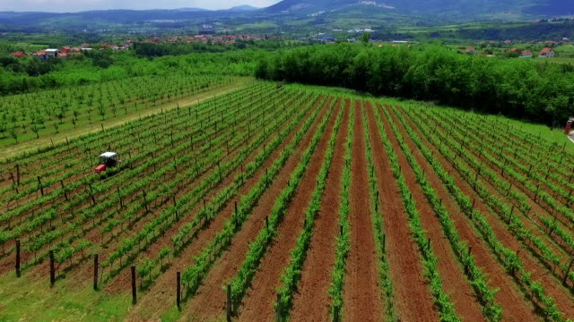 vineyard aerial view - grape stock videos & royalty-free footage