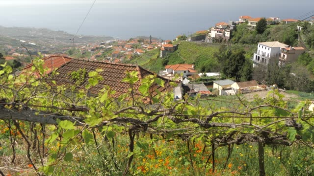 vineyard and countryside near cabo girao, atlantic ocean visible in background, madeira, portugal, atlantic, europe - traditionally portuguese stock videos and b-roll footage