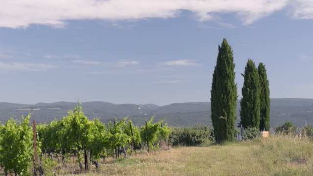 vineyard and cypress trees - luberon stock-videos und b-roll-filmmaterial