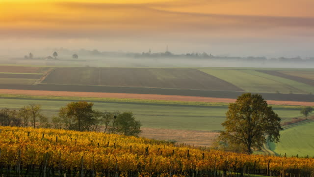 t/l vineyard and fields on a foggy autumn morning - landscaped stock videos & royalty-free footage