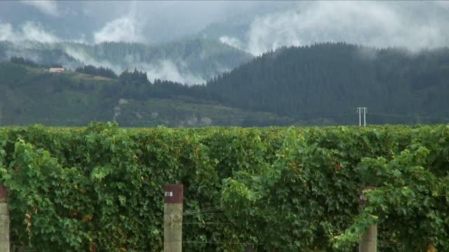 ws zo vineyard and hills / renwick, new zealand - new zealand stock-videos und b-roll-filmmaterial