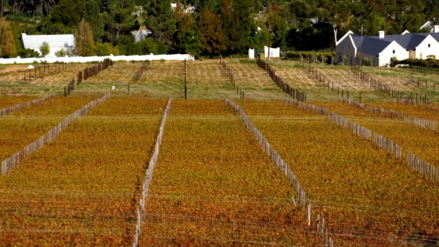 ws tu vineyard and mountains / franschhoek/ western cape/ south africa - franschhoek stock videos and b-roll footage