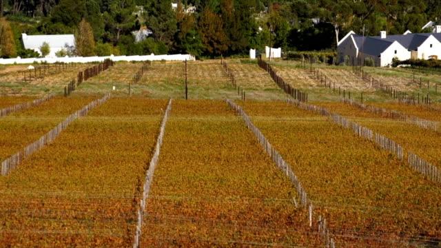 vídeos y material grabado en eventos de stock de ws tu vineyard and mountains / franschhoek/ western cape/ south africa - cabo winelands