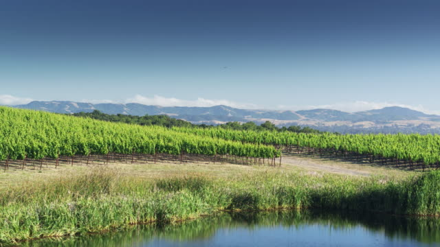 Vineyard and Woodland in Northern California Landscape