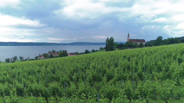 vineyard around bodensee lake (lake constance) / switzerland - wide stock-videos und b-roll-filmmaterial