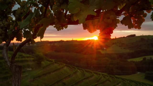 t/l vineyard at sunrise - prekmurje stock videos & royalty-free footage
