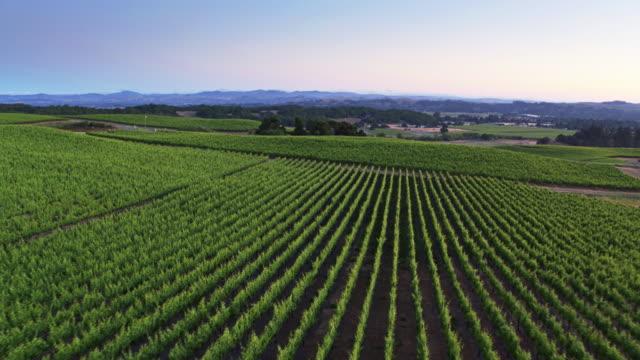 Vineyard at Twilight - Drone Shot