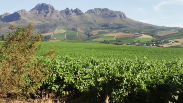 Vineyard beauty landscape