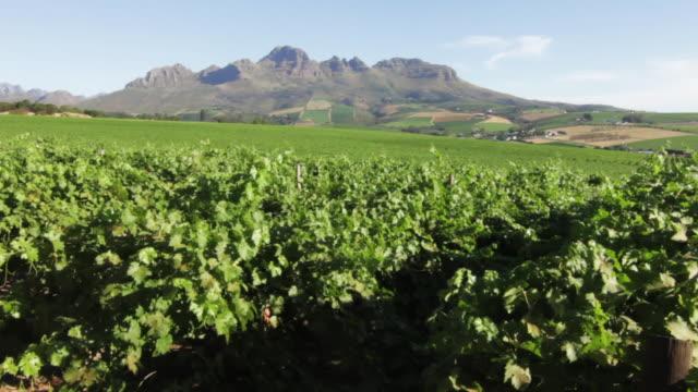 vídeos de stock, filmes e b-roll de vineyard beauty landscape - stellenbosch