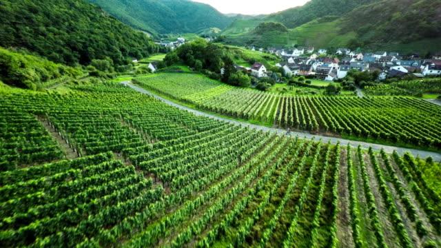 LUFTAUFNAHME : Weinberg-Landschaft in Deutschland.
