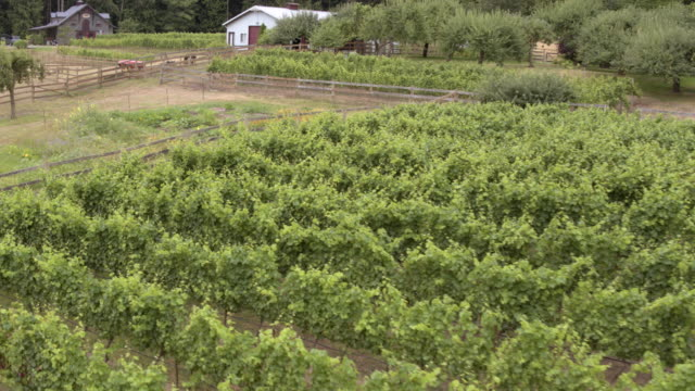 A vineyard during daytime