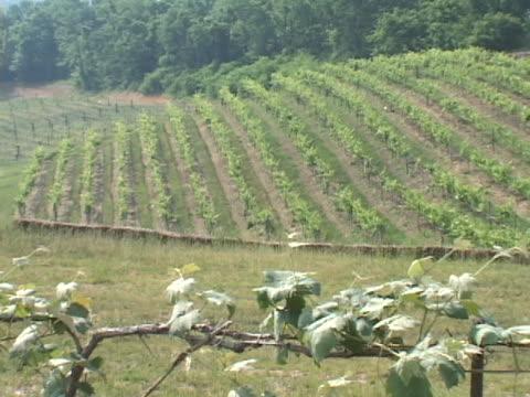 stockvideo's en b-roll-footage met vineyard field - plant attribute