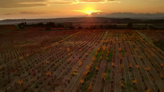 vídeos de stock e filmes b-roll de vineyard files at sunset - espanha
