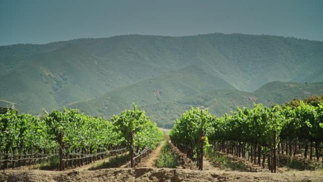 Vineyard in a Valley