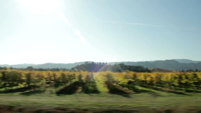 vídeos y material grabado en eventos de stock de viñedo en otoño - hoja de la vid