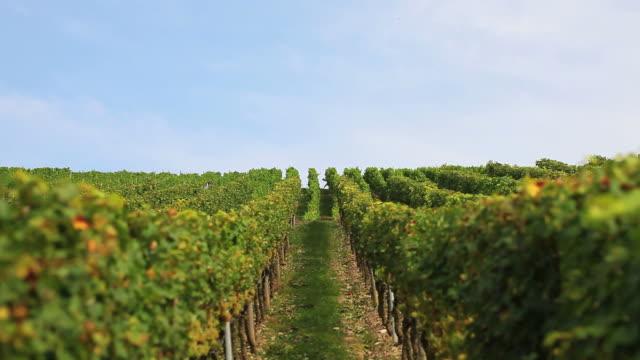 CRANE Vineyard In Autumn