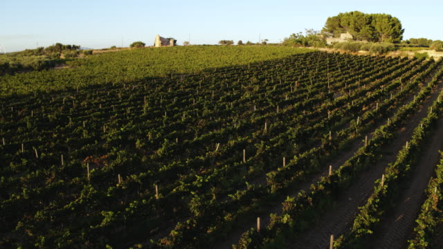 vineyard in italy - sicily stock videos & royalty-free footage