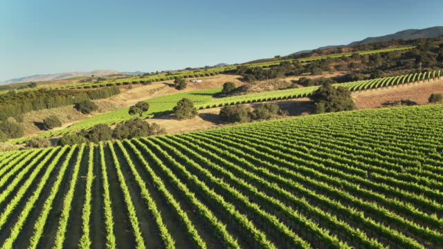 vineyard in monterey county, northern california - aerial shot - monterey county stock videos and b-roll footage