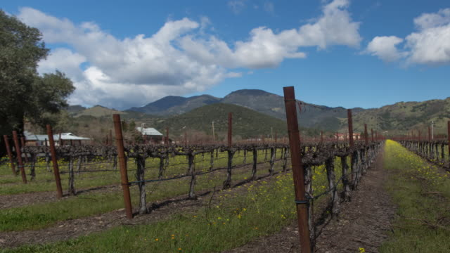 vineyard in napa valley, california - mustard stock videos & royalty-free footage