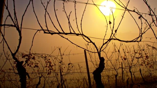 vídeos de stock, filmes e b-roll de ws vineyard no outono - raw footage