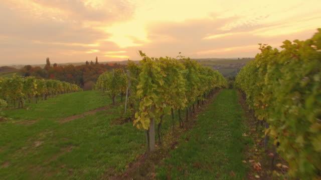 aerial vineyard in the wine-growing countryside - prekmurje stock videos & royalty-free footage
