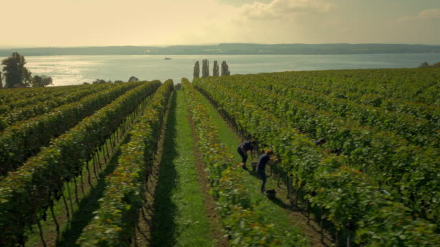 vineyard in vienna (lake constance) - four people stock videos & royalty-free footage