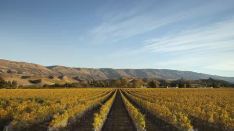 vídeos y material grabado en eventos de stock de a vineyard is seen through the four seasons - estación entorno y ambiente