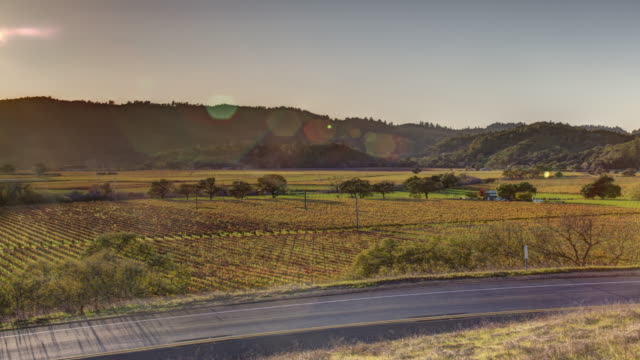 Vineyard Landscape in Napa Valley, California