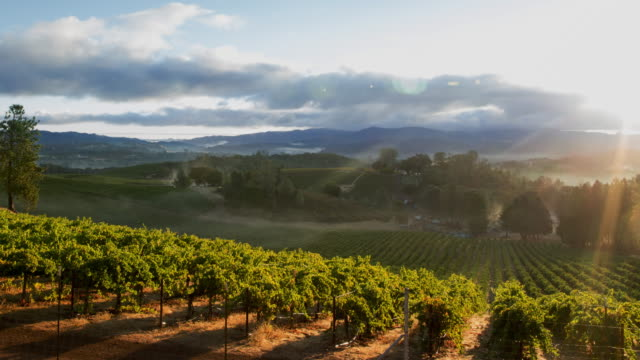 vineyard misty sunrise - vineyard stock videos & royalty-free footage