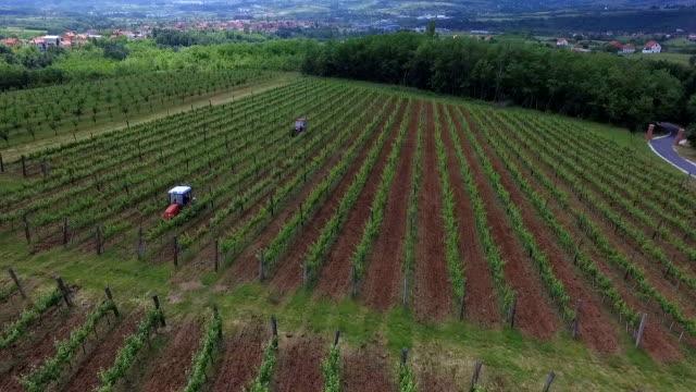 vineyard montage - insetticida video stock e b–roll