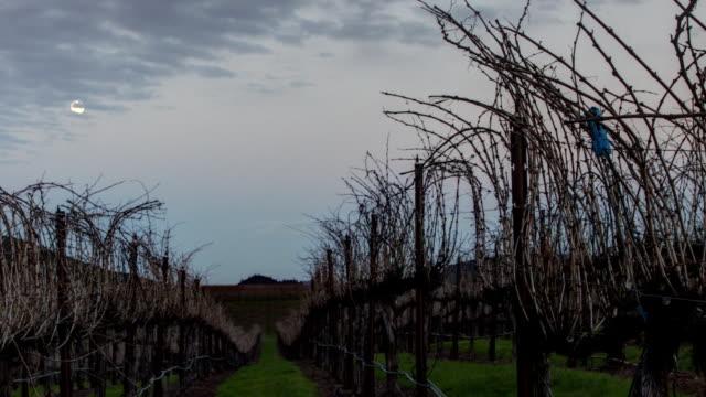 Vineyard Moonrise