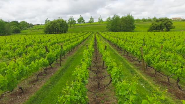 Vineyard New Zealand.