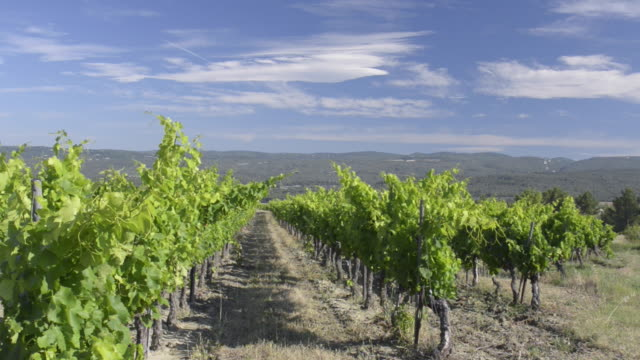 vineyard of roussillon - luberon stock-videos und b-roll-filmmaterial