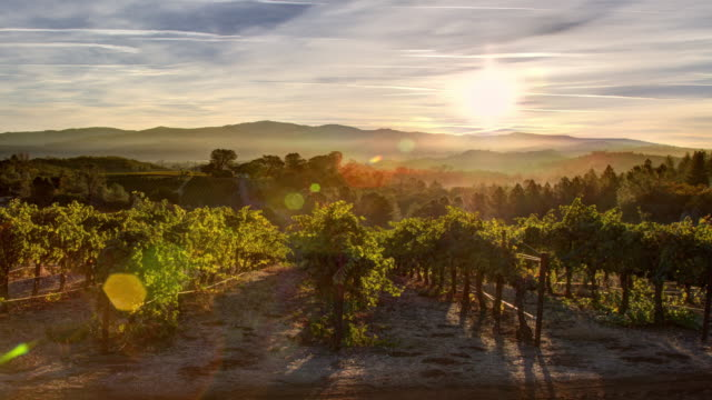 vineyard sunrise - northern california stock videos & royalty-free footage