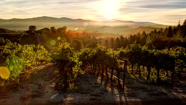 vineyard sunrise - vine stock videos & royalty-free footage