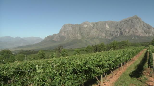 vídeos de stock, filmes e b-roll de ws pan vineyard surrounded by mountains / stellenbosch, western cape, south africa - stellenbosch
